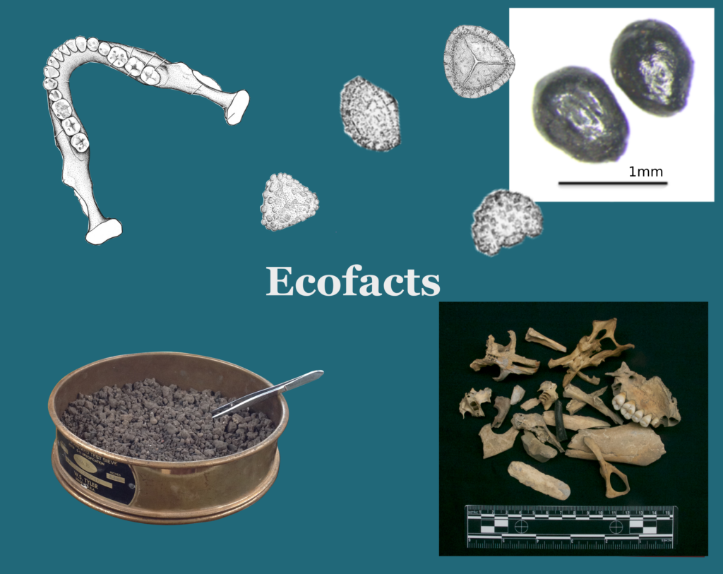 artifacts vs ecofacts In archeological excavations, there are three main components and these are the artifacts, features, and ecofacts these three components are instrumental when.