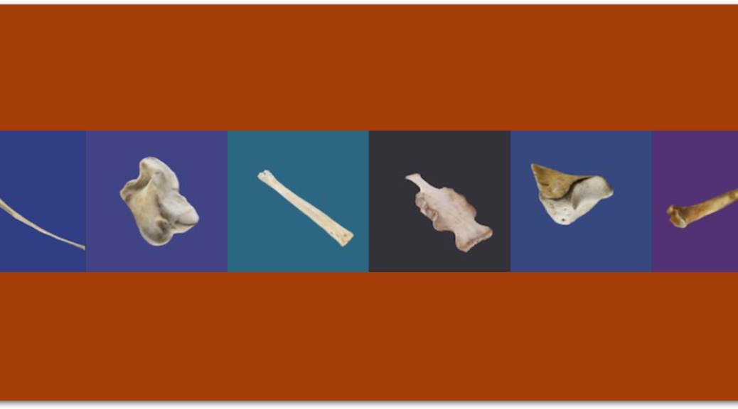 Virtual 3D Animal Bone Models - Plaza of the Columns Complex