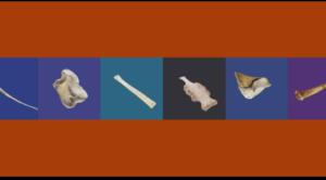 Modelos 3D (Tercera Dimensión) de Huesos Animales